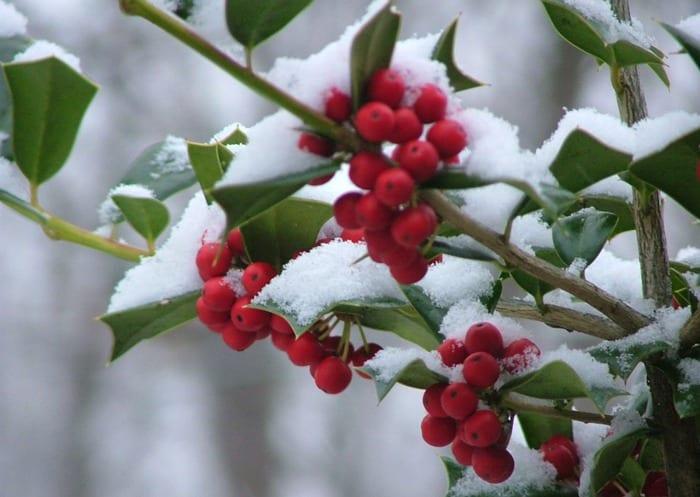 Manutenzione invernale del giardino pulisprintsrl for Giardino invernale